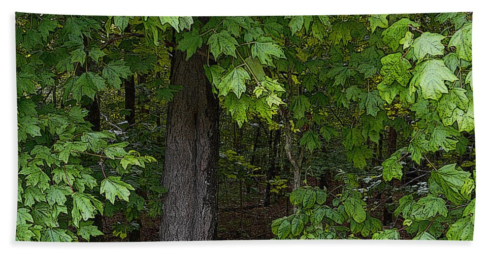 Woods Bath Sheet featuring the painting Into The Woods by Kathy Symonds