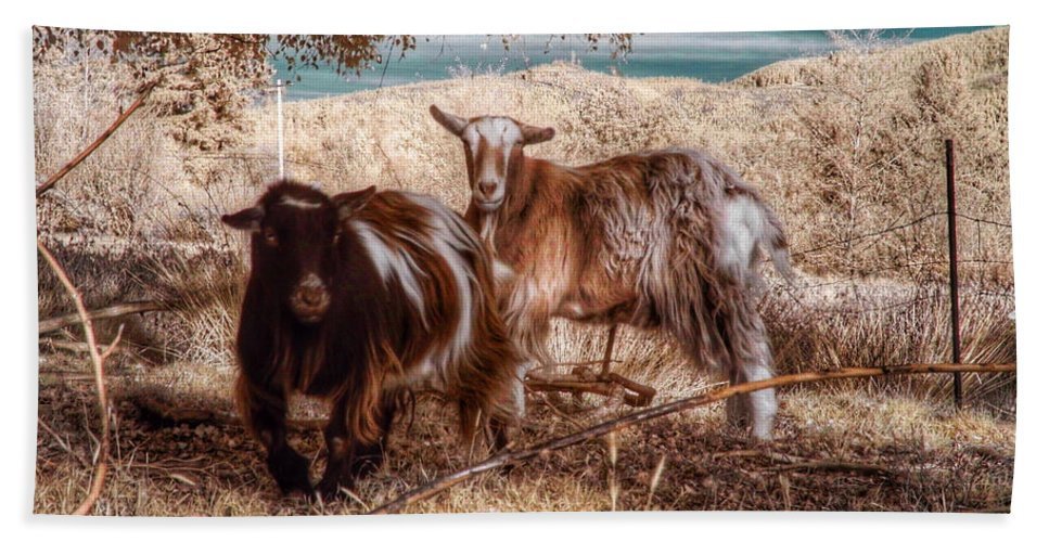 Goats Bath Sheet featuring the photograph Invisible Lives by Chriss Pagani