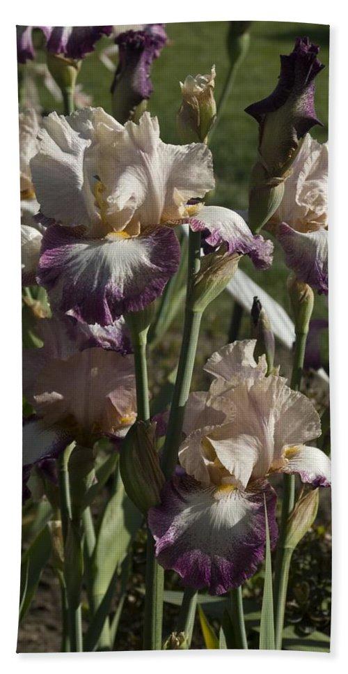 Iris Bath Sheet featuring the photograph Iris 3 by Sara Stevenson