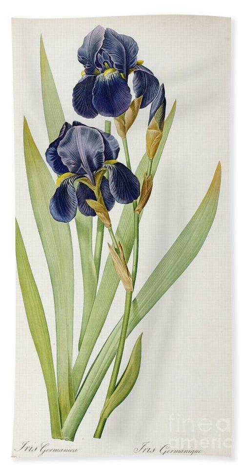 Iris Bath Towel featuring the painting Iris Germanica by Pierre Joseph Redoute