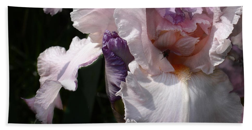Flower Bath Towel featuring the photograph Iris Lace by Steve Karol