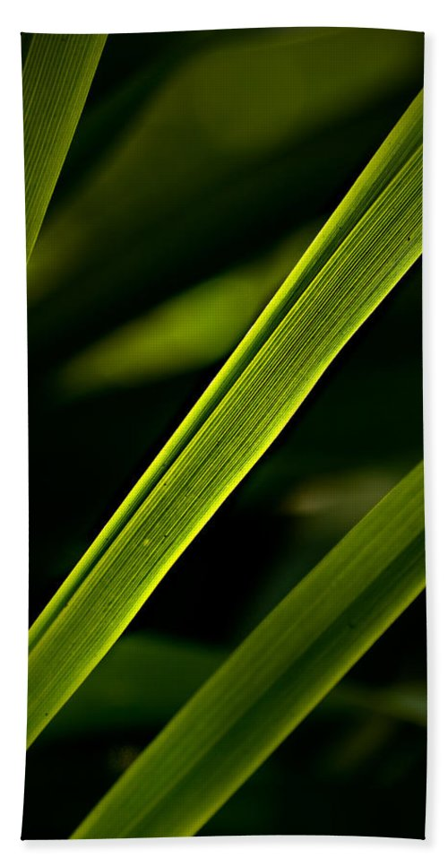 Garden Hand Towel featuring the photograph Iris Leaves by Onyonet Photo Studios