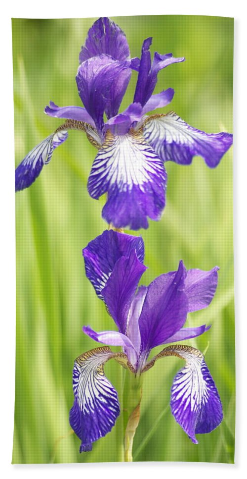 Flower Hand Towel featuring the photograph Iris Pair by Michael Peychich
