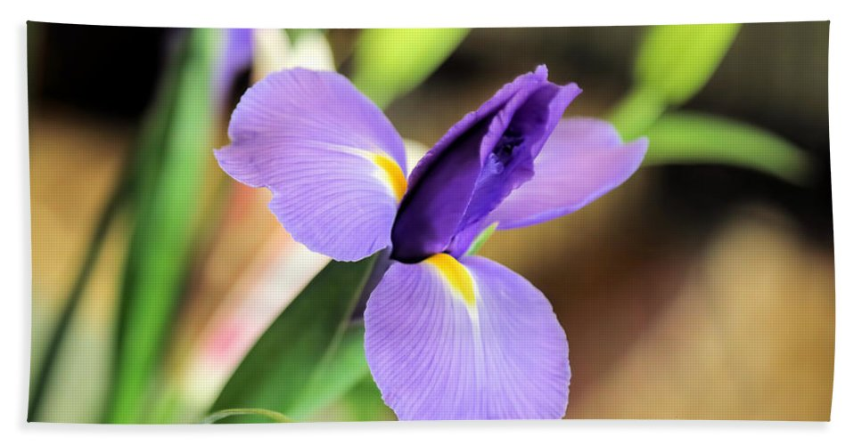 Iris Hand Towel featuring the photograph Iris Unfolding IIi by Theresa Campbell