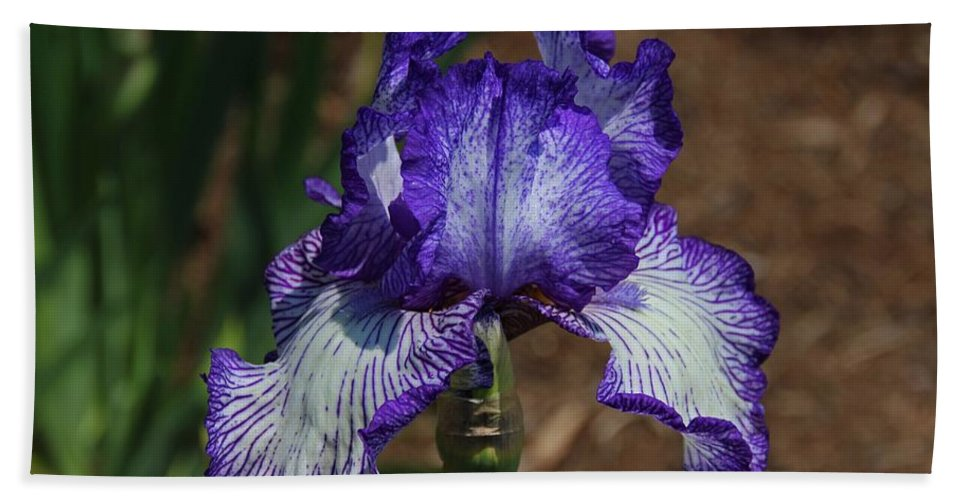 White Bath Sheet featuring the photograph Iris Unraveled by Michiale Schneider