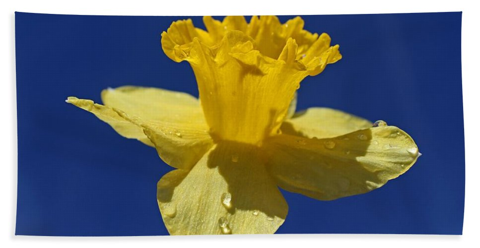 Daffodil Hand Towel featuring the photograph Irresistible Attraction by Michiale Schneider