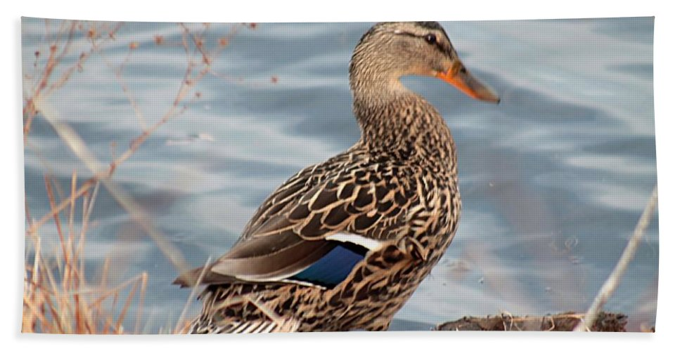 Mallard Hand Towel featuring the photograph Isn't She Lovely by Linda Crockett