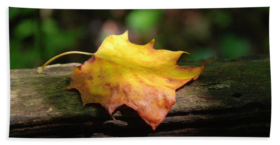 Photography Hand Towel featuring the photograph Its Fall by Susanne Van Hulst