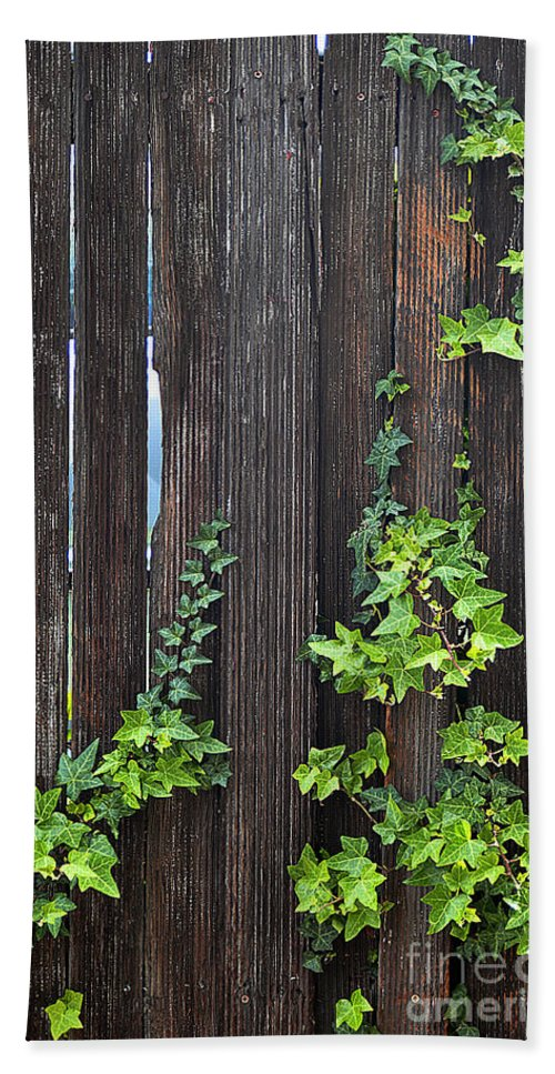 Clay Bath Towel featuring the photograph Ivy On Fence by Clayton Bruster