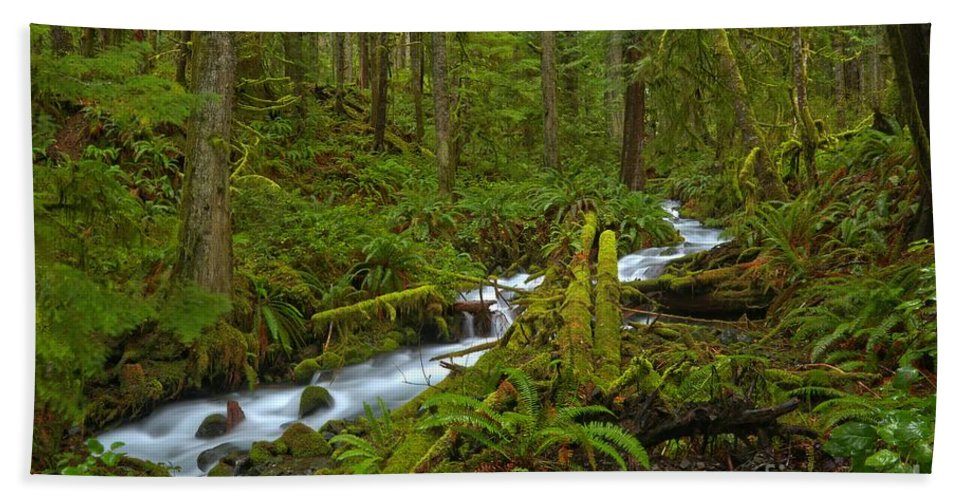 Tranquility Hand Towel featuring the photograph Lifeblood Of The Rainforest by Adam Jewell