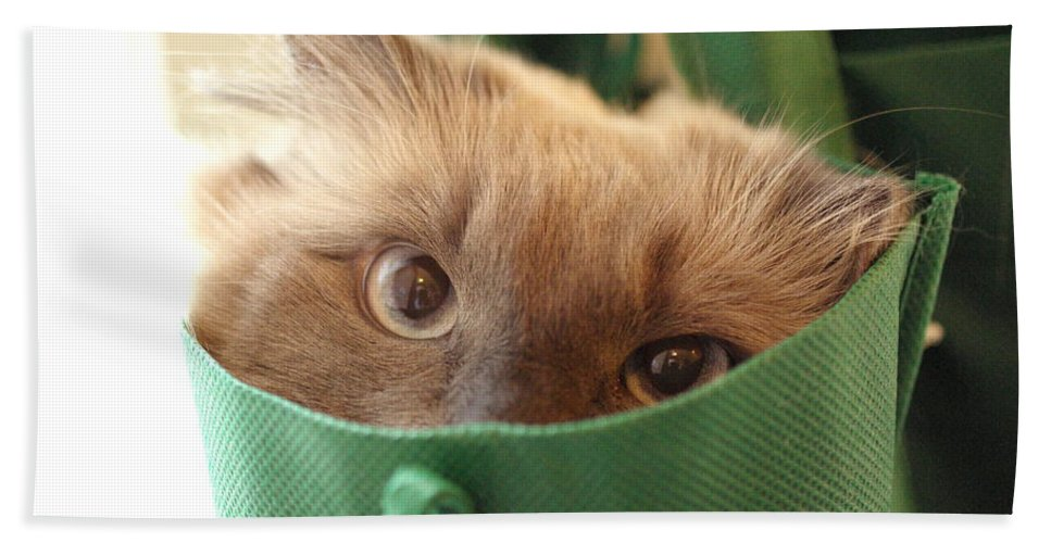 Cat Hand Towel featuring the photograph Jack In The Bag by Cindy Johnston