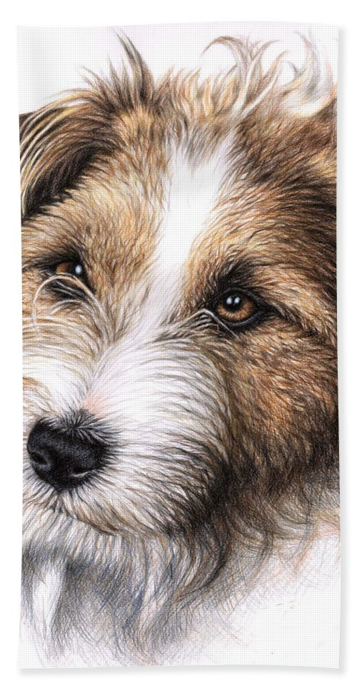 Dog Hand Towel featuring the drawing Jack Russell Terrier Portrait by Nicole Zeug
