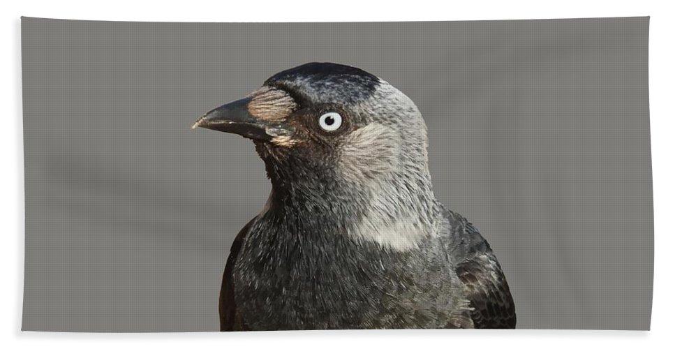 Western Bath Sheet featuring the photograph Jackdaw Corvus Monedula Bird Portrait Vector by Taiche Acrylic Art