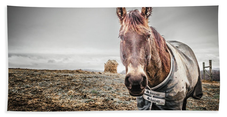 Farm Life Bath Sheet featuring the photograph Jacketed Horse by Jim Love