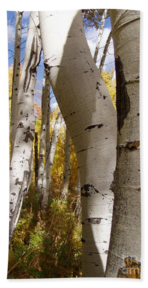 Trees Hand Towel featuring the photograph Jackson Hole Wyoming by Amanda Barcon