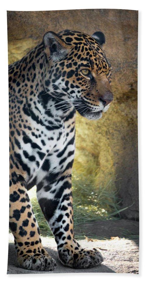 Jaguar Bath Sheet featuring the photograph Jaguar At Rest by Steven Jones