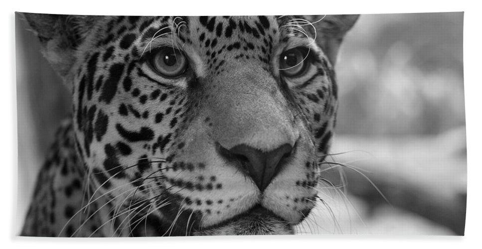 Jaguar Bath Sheet featuring the photograph Jaguar In Black And White by Sandy Keeton