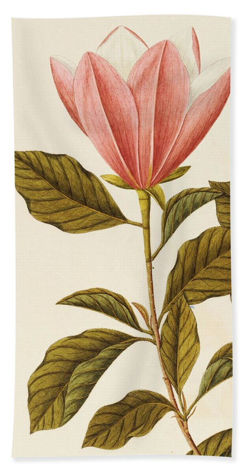 Pink Hand Towel featuring the painting Japanese Bigleaf Magnolia by Angela Rossi Bottione