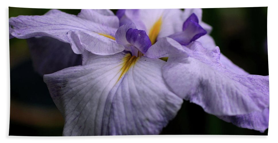 Flower Bath Sheet featuring the photograph Japanese Iris In Bloom by Smilin Eyes Treasures