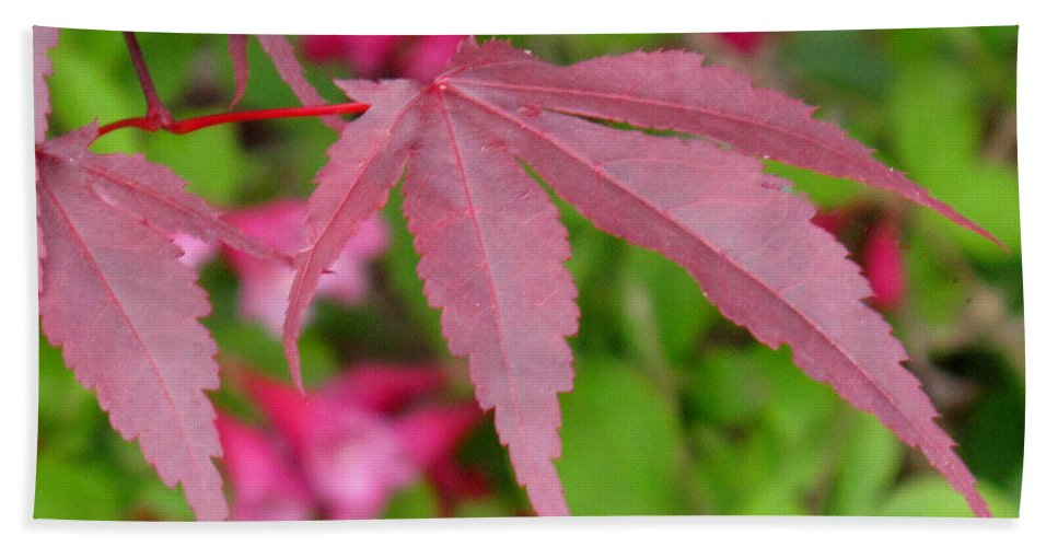 Japanese Maple Bath Towel featuring the photograph Japanese Maple by Ian MacDonald