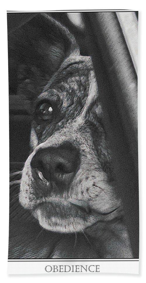 Dog Hand Towel featuring the photograph Jazz by Karen W Meyer