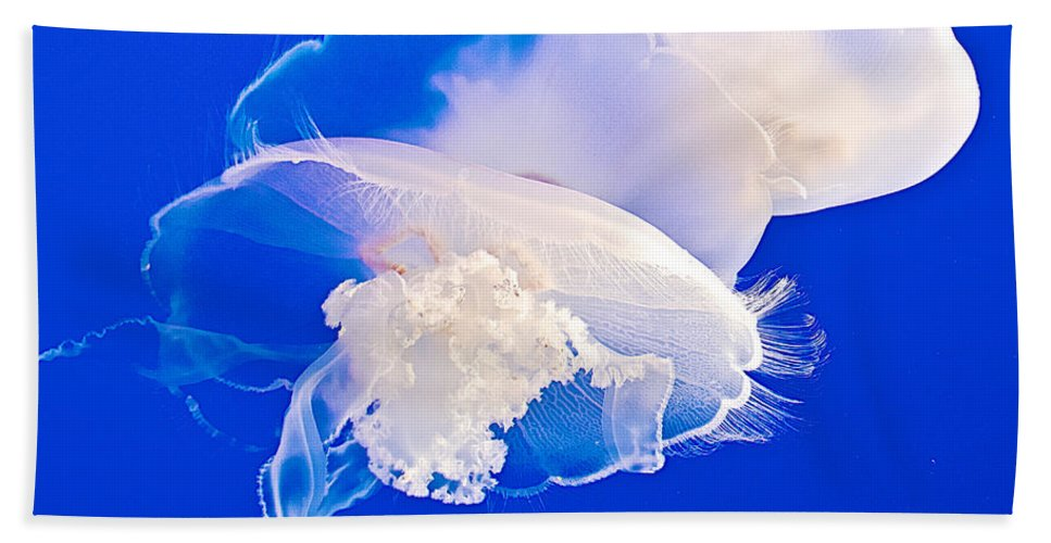 Jellies In Jellyfish Tank In Monterey Aquarium Hand Towel featuring the photograph Jellies In Jellyfish Tank In Monterey Aquarium-california by Ruth Hager
