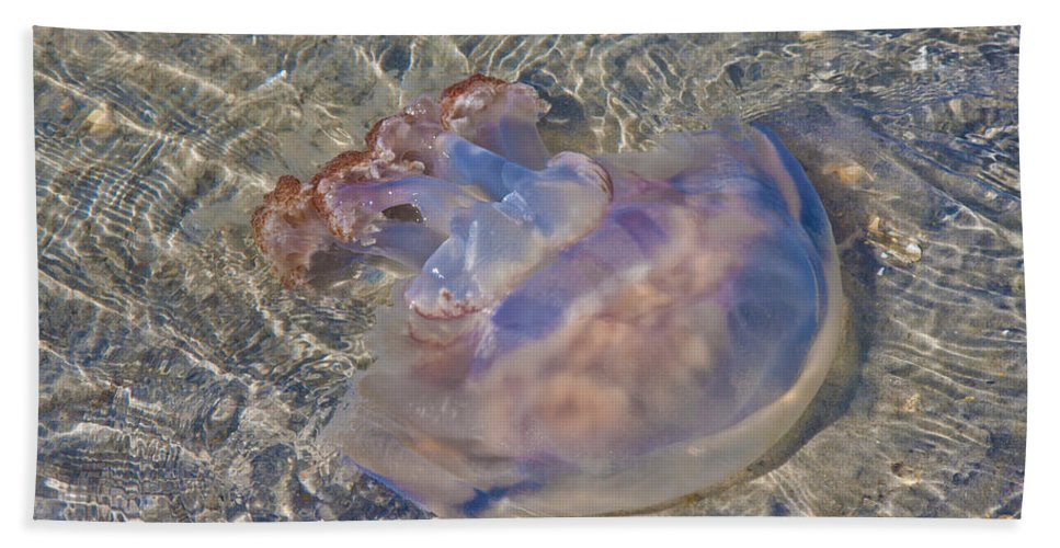 Topsail Bath Sheet featuring the photograph Jellyfish by Betsy Knapp
