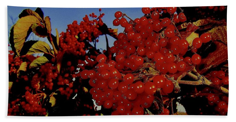 Berries Hand Towel featuring the photograph Jewels Of Autumn 4 by Elizabeth Tillar
