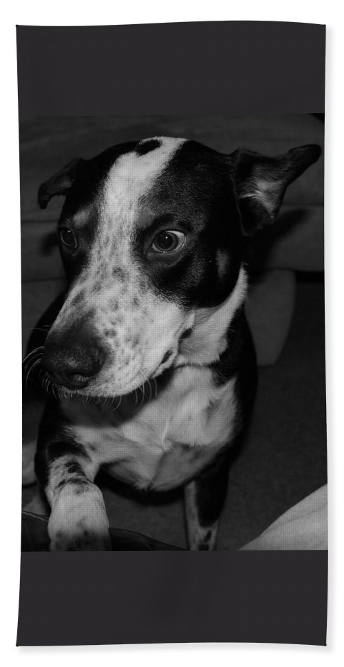 Black And White Bath Sheet featuring the photograph Jimmy by Rob Hans