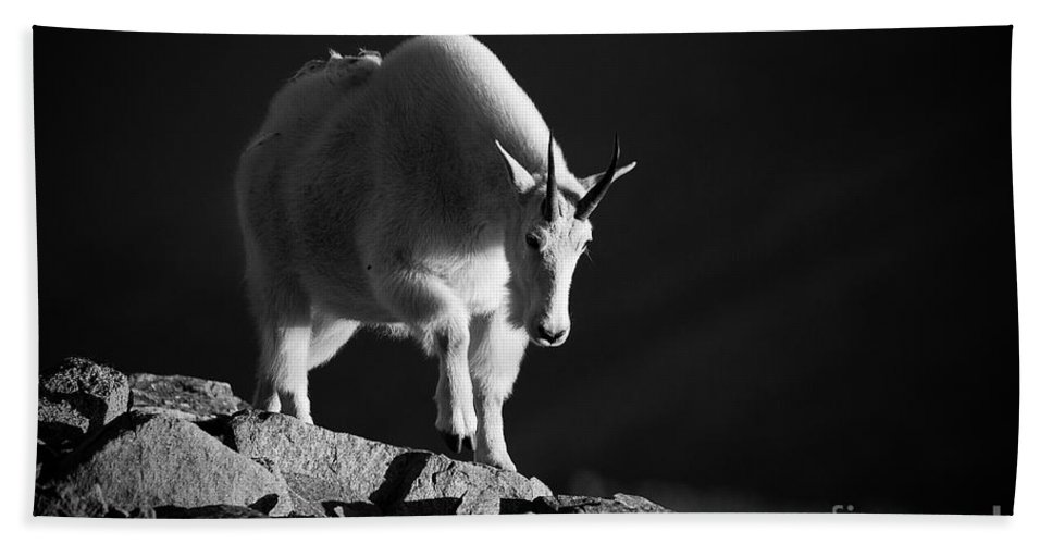 Mountain Goats Hand Towel featuring the photograph Flight From Darkness by Jim Garrison