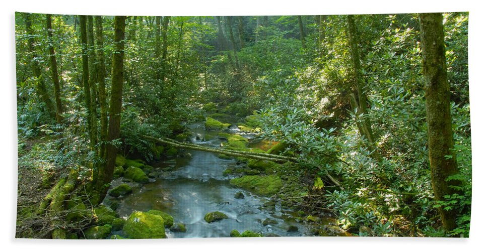 Joyce Kilmer Memorial Forest Hand Towel featuring the photograph Joyce Kilmer Memorial Forest by David Lee Thompson