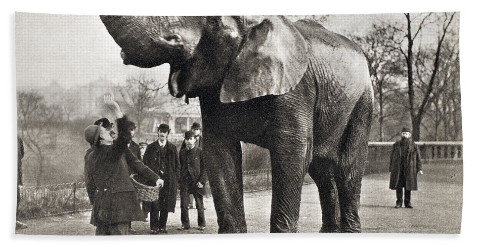1882 Bath Sheet featuring the photograph Jumbo, C1882 by Granger