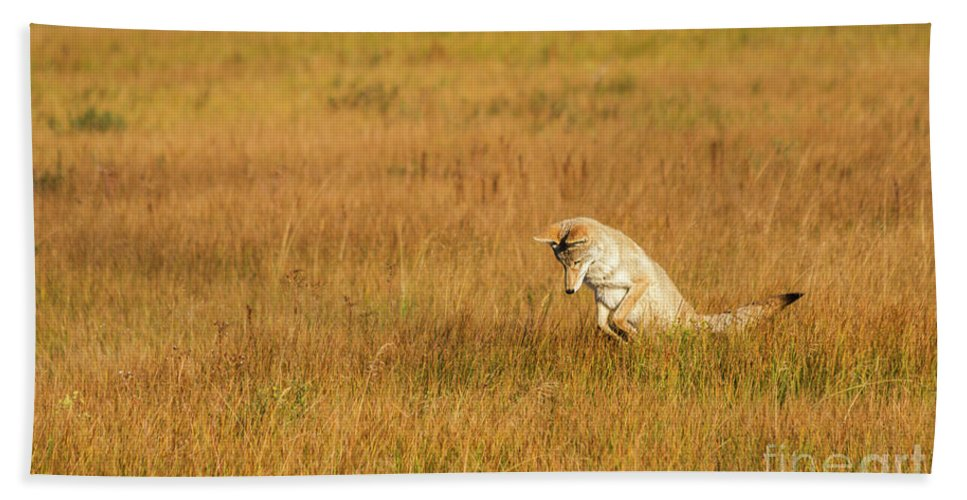 Nature Hand Towel featuring the photograph Jumping Coyote by Mirko Chianucci