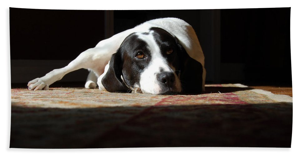 Dogs.animal Hand Towel featuring the photograph Junebug by Robert Meanor