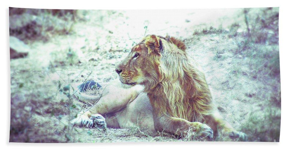 Lion Bath Sheet featuring the photograph Jungle King by Neha Gupta