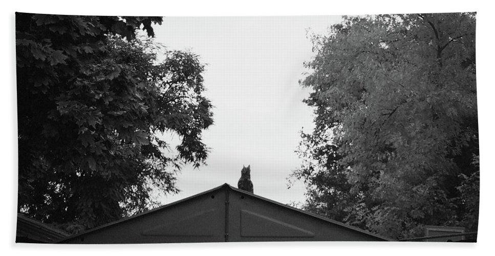 Film Photography Hand Towel featuring the photograph Just A Cat by Anna Petropavlovskaya