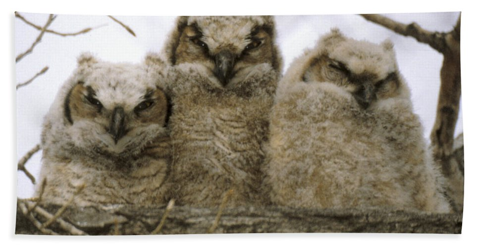 Owls Hand Towel featuring the photograph Just Babies by Jerry McElroy