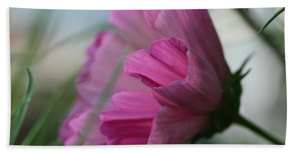 Cosmos Hand Towel featuring the photograph Just Breezing Through by Connie Handscomb