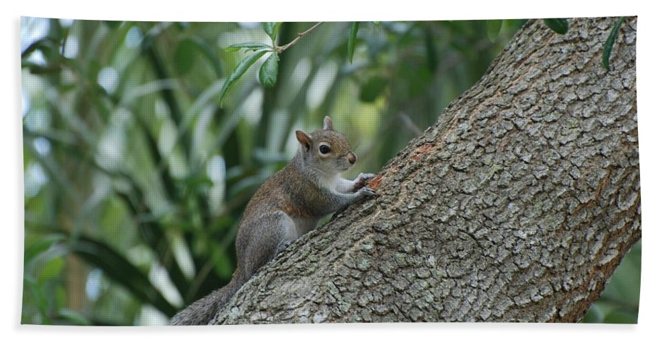 Squirrels Bath Towel featuring the photograph Just Chilling Out by Rob Hans