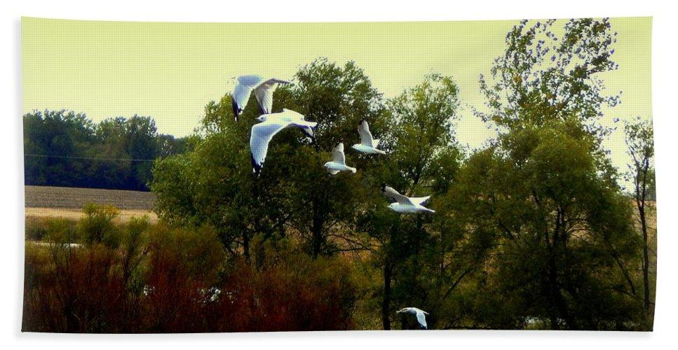 Birds Bath Sheet featuring the photograph Just Go Then by Curtis Tilleraas