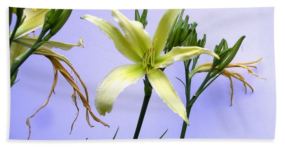 Flower Hand Towel featuring the photograph Just Hanging On by Rich Bodane