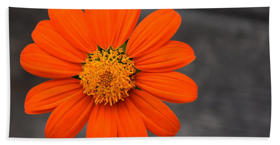 Flower Bath Sheet featuring the photograph Just Hanging Out by Maria Keady