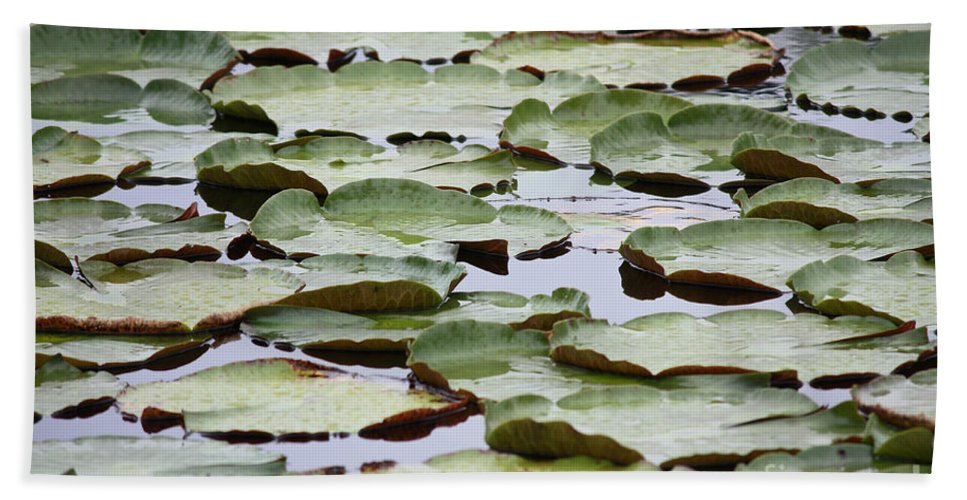 Nature Bath Sheet featuring the photograph Just Lily Pads by Carol Groenen