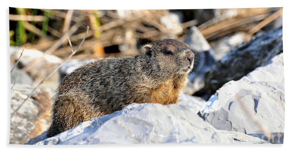 Ground Hog Bath Sheet featuring the photograph Just Relaxing by Todd Hostetter