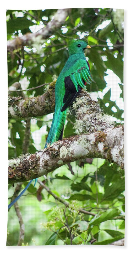Resplendent Quetzal Hand Towel featuring the photograph Just Sittin by Wes Hanson