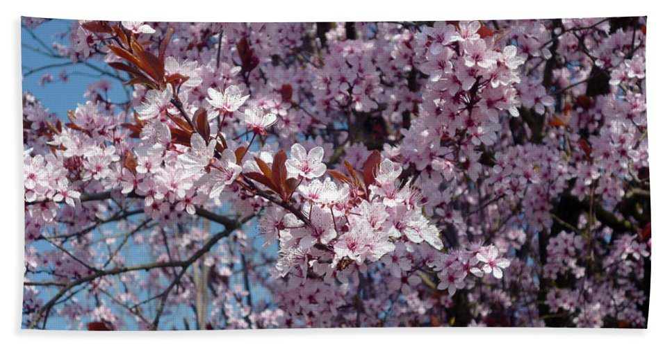 Plum Bath Sheet featuring the photograph Just Spring by Laura Greco