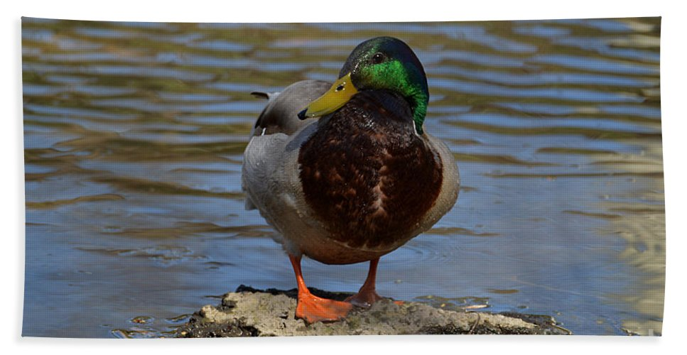 Mallard Duck Hand Towel featuring the photograph Just Standing On A Rock by Sheila Lee