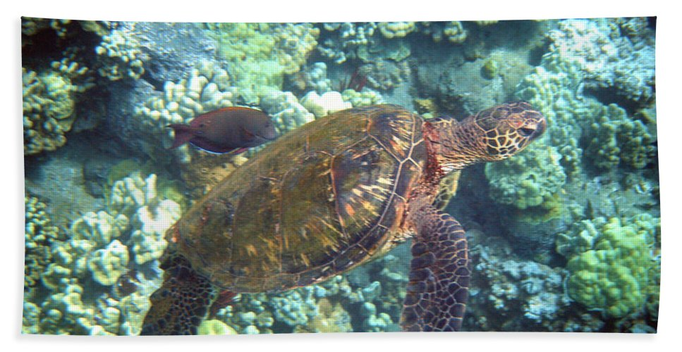 Sea Turtle Bath Sheet featuring the photograph Just Tagging Along by Angie Hamlin