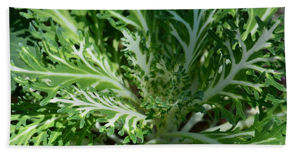 Kale Hand Towel featuring the photograph Kale by Maria Urso