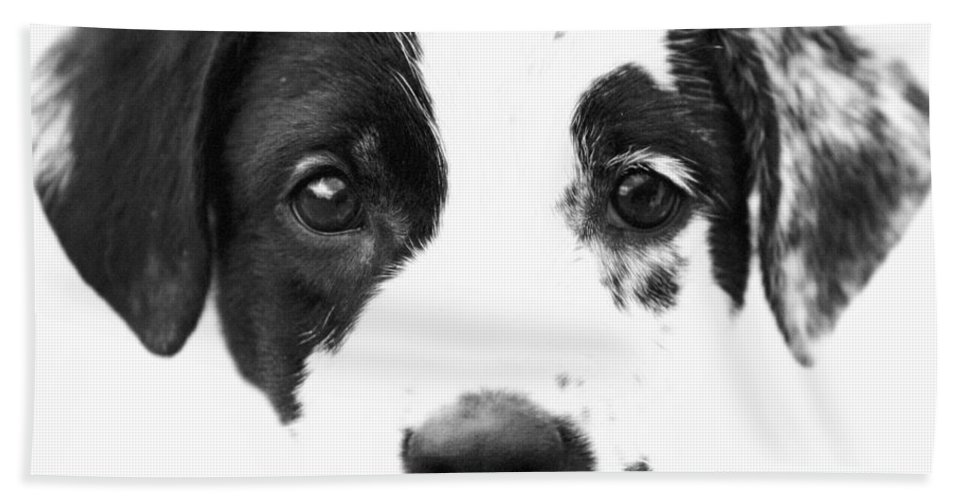 Dogs Hand Towel featuring the photograph Karma by Amanda Barcon